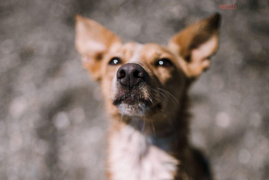 Fotografía de mascotas Málaga