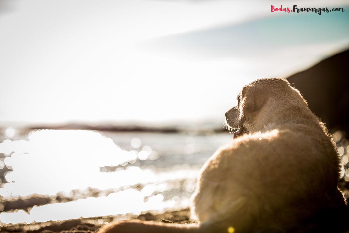 Fran Vargas , Fotógrafo de mascotas Málaga