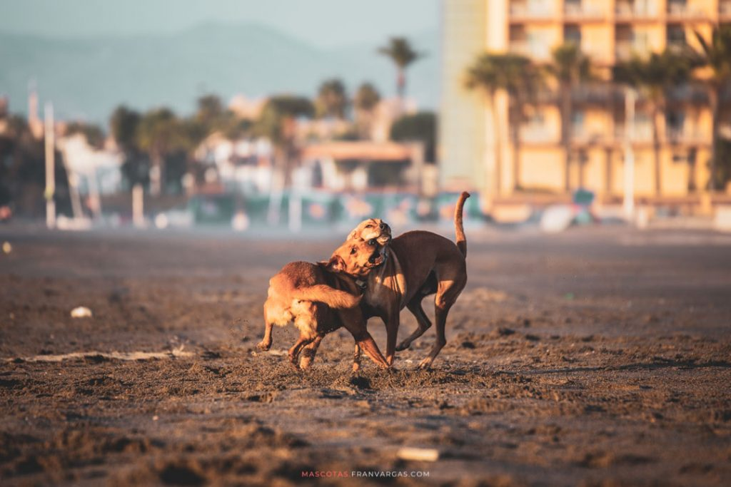 Fotógrafo de mascotas Málaga | Fran Vargas Photography | mascotas.franvargas.com